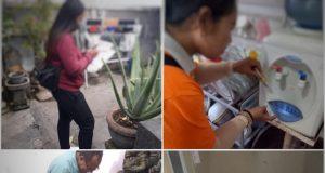 Berita pati hari ini dinas kesehatan pati nyamuk